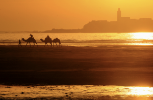 Essaouira kupranugariai