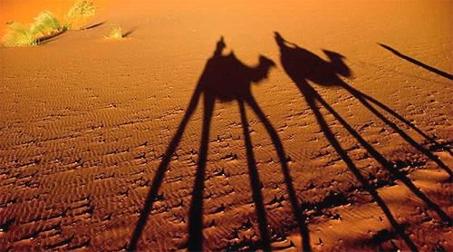 Kupranugariai dykumoje